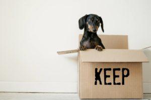 Dachshund Sitting Inside a Cardboard Box Labeled Keep